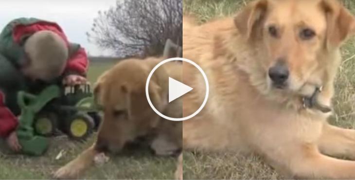 cooper_child-dog_rescue_cover