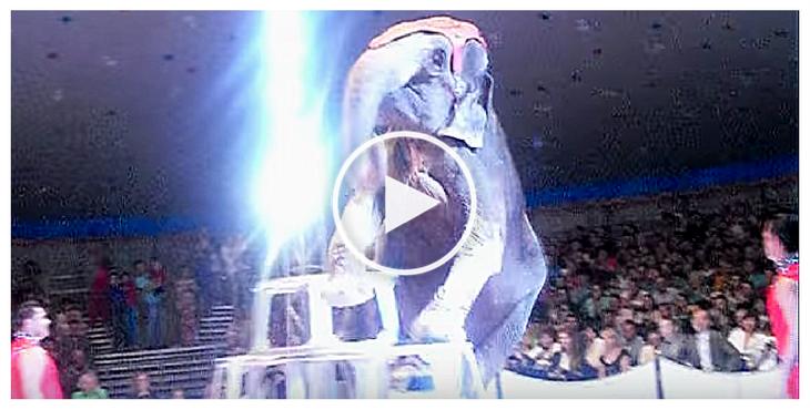 elephant-circus-cover