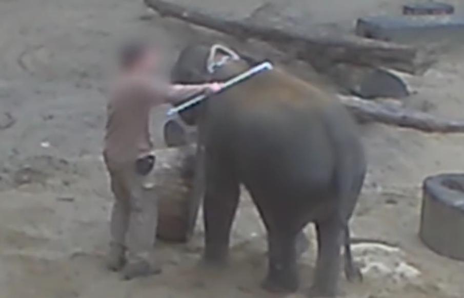 Elephantmistreatedinzoo