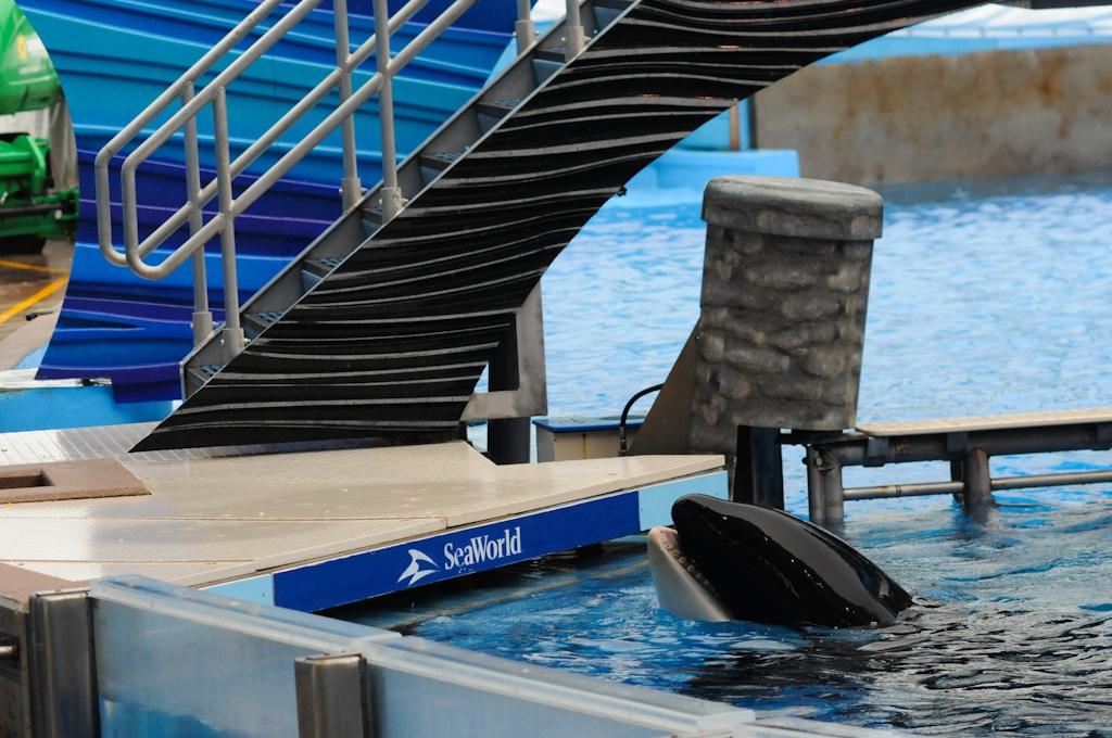 SeaWorld2011-HolidogTimes