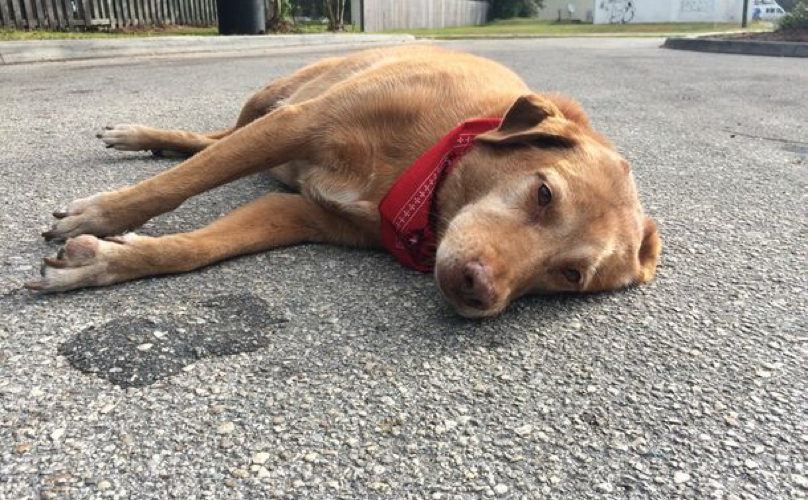 car-accident-dog-2