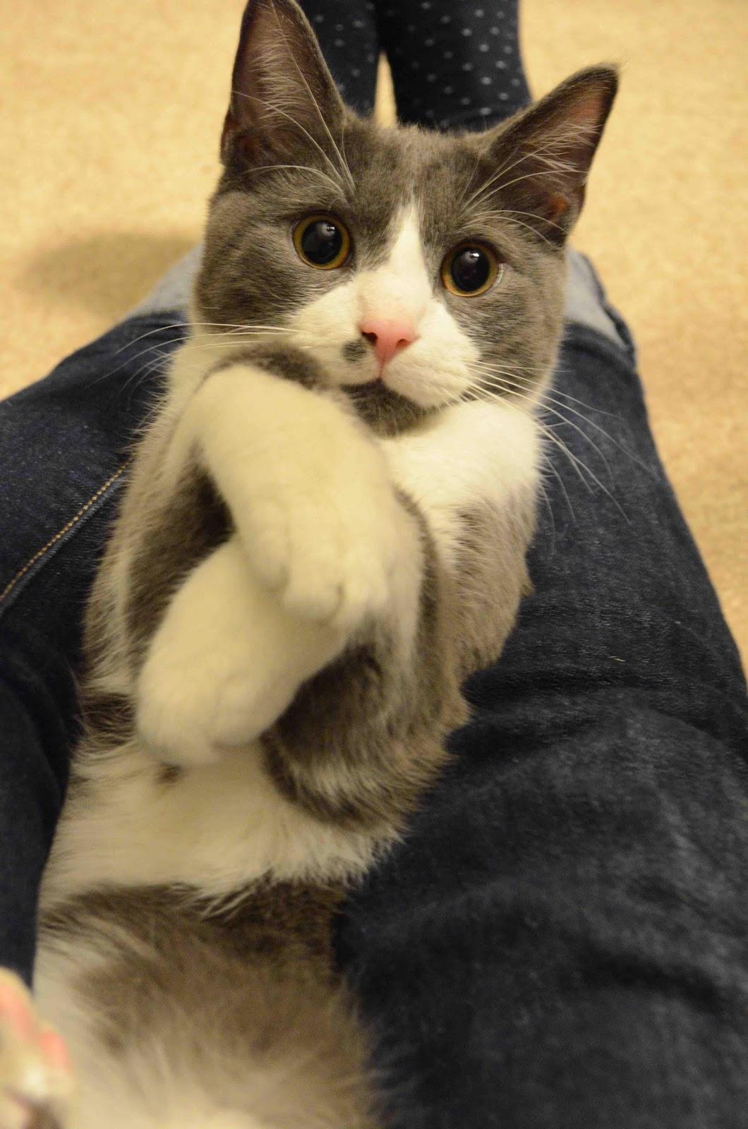 cat-cuddles
