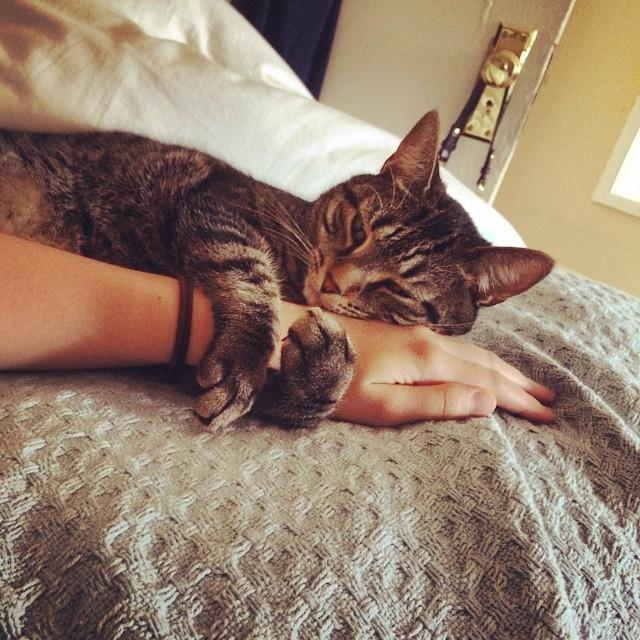 cat-cuddling