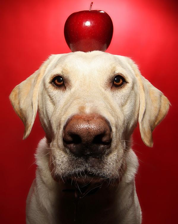 pommes chien