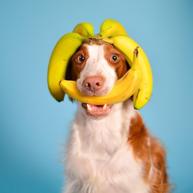 dog-bananas