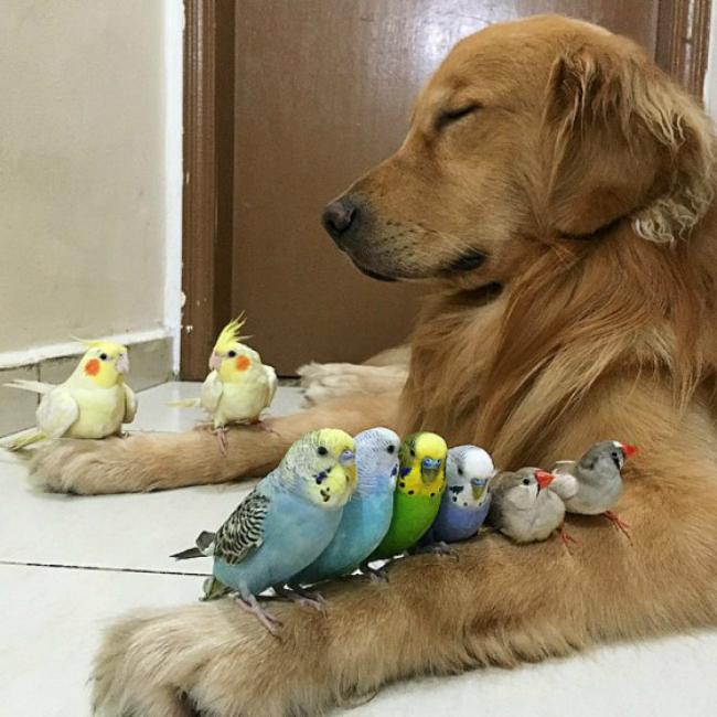 dog-birds