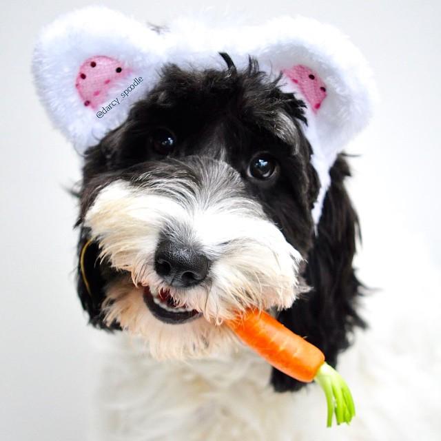 dog-carrots