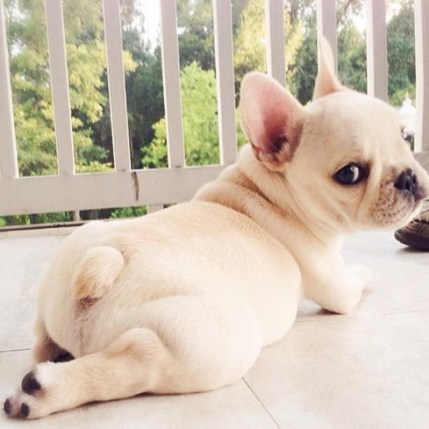dog-chocolate-5