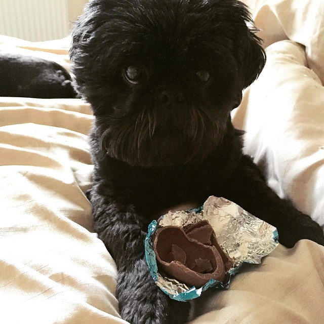 dog-chocolate-signs-cover-5
