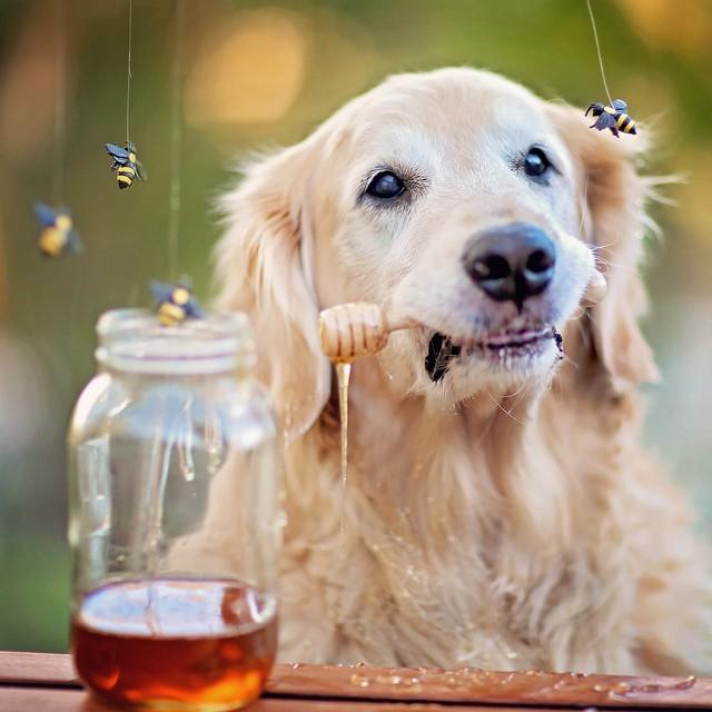 dog-food-5