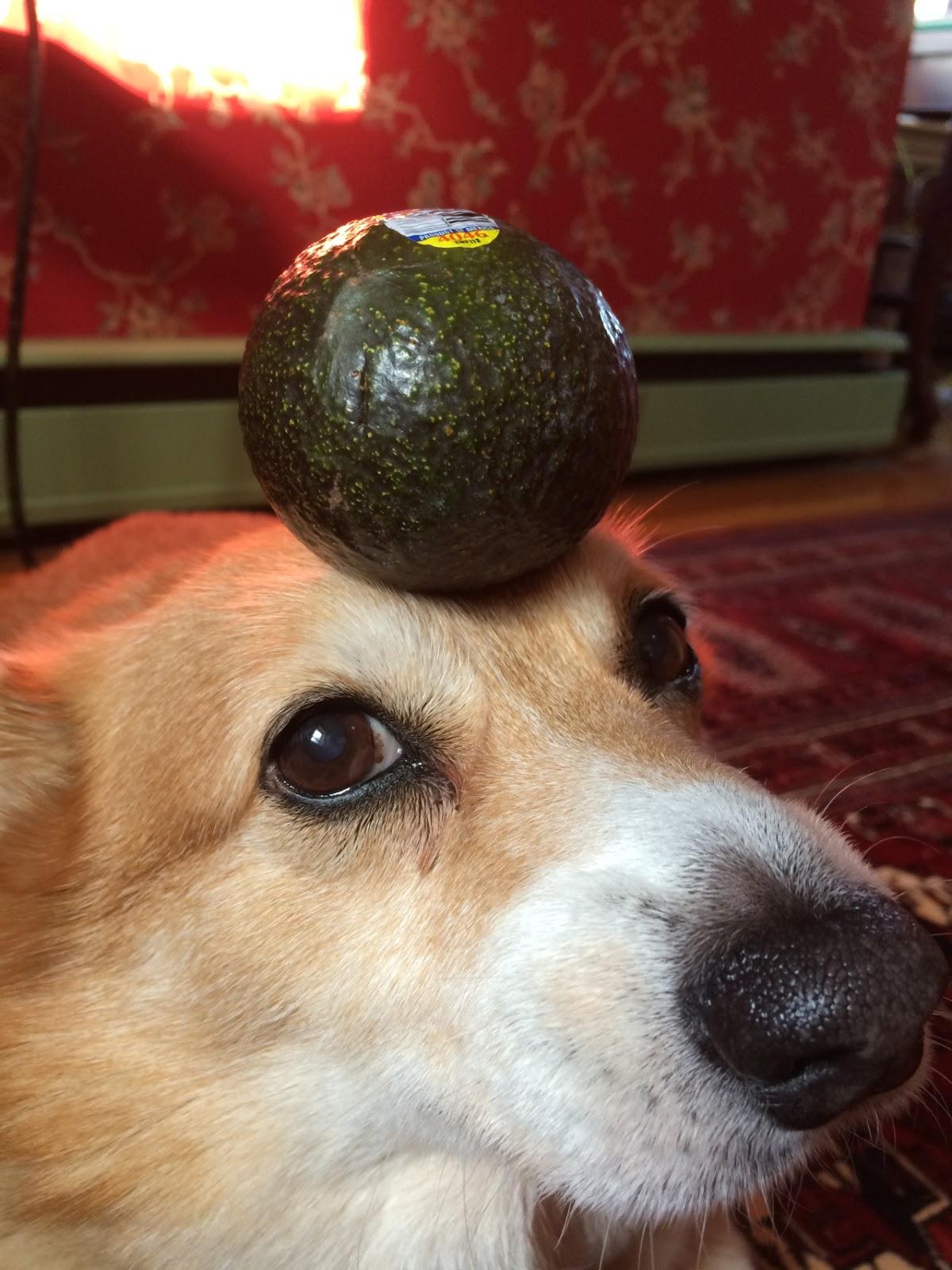 dog-food-6