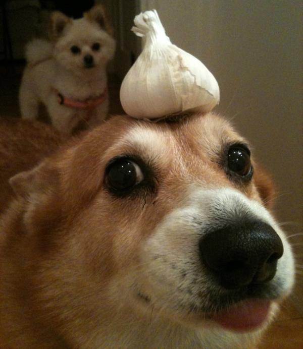 dog-food-7