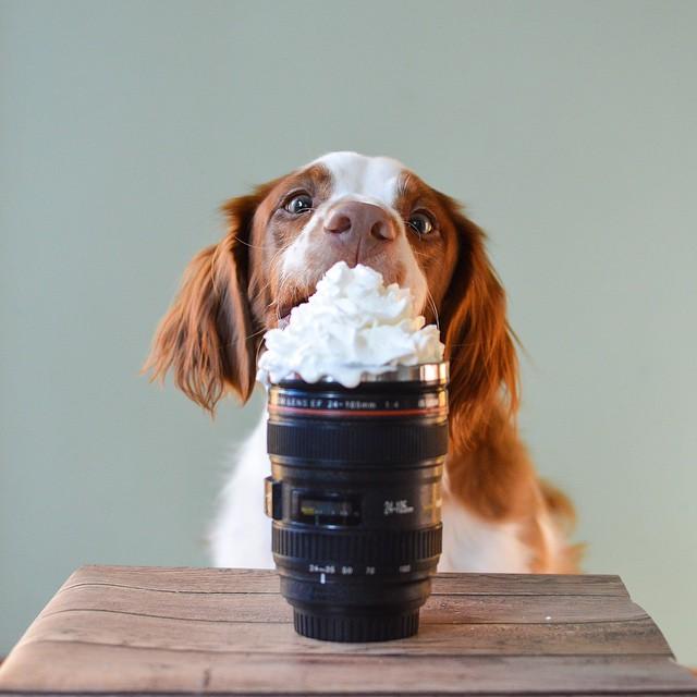 dog-food-8