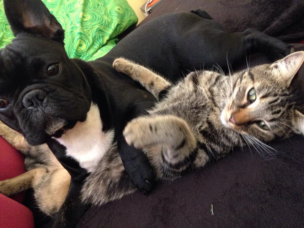 adoption refuge
