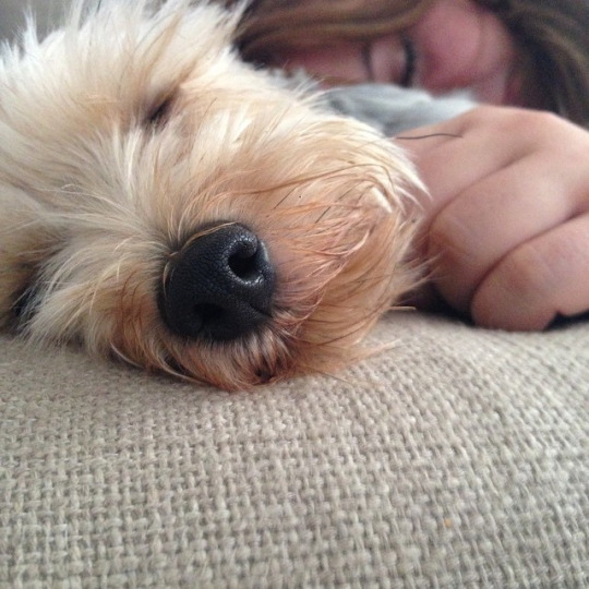 18 Reasons You Should Never Adopt A Yorkshire Terrier