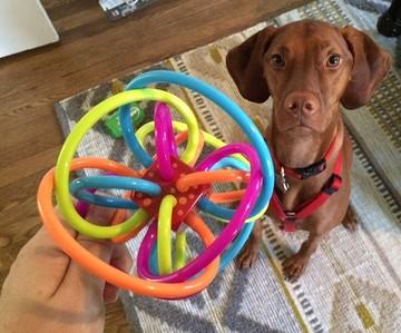 dog-baby-toy
