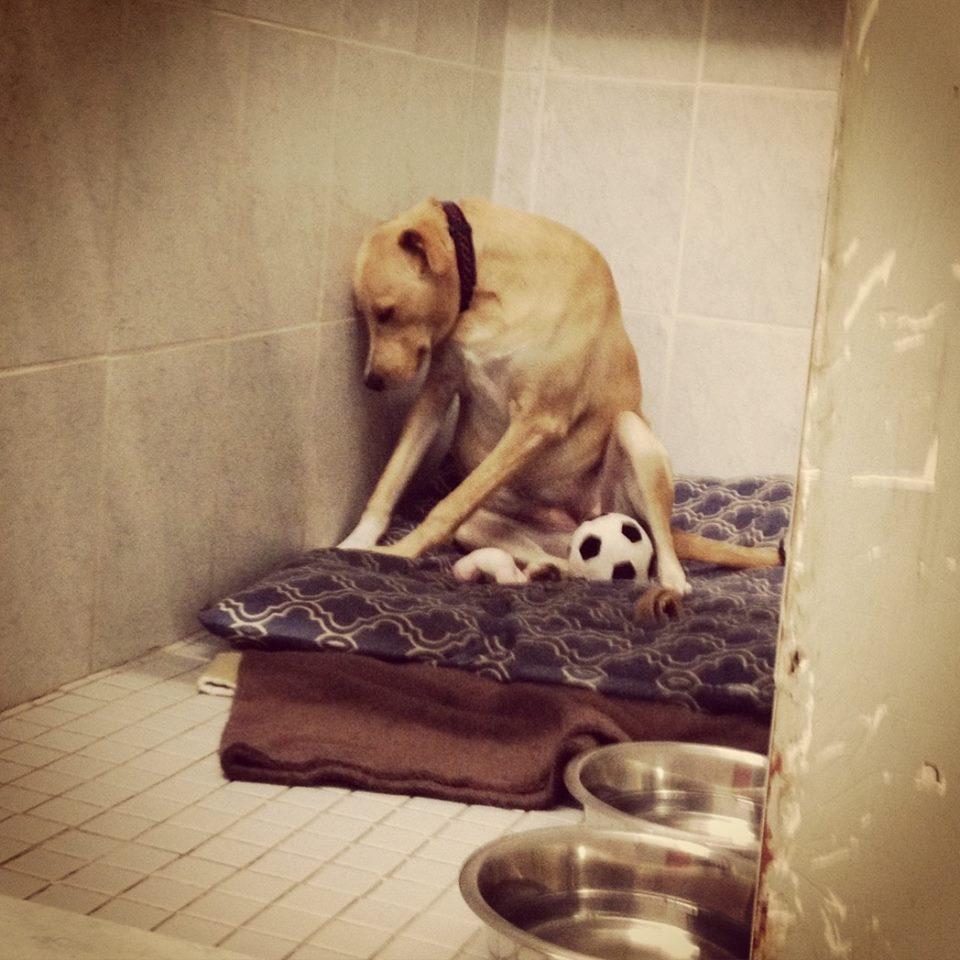 saddest-dog