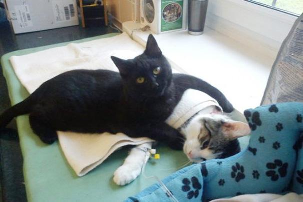 veterinary-nurse-cat-hugs-shelter-animals-radamenes-bydgoszcz-poland-1