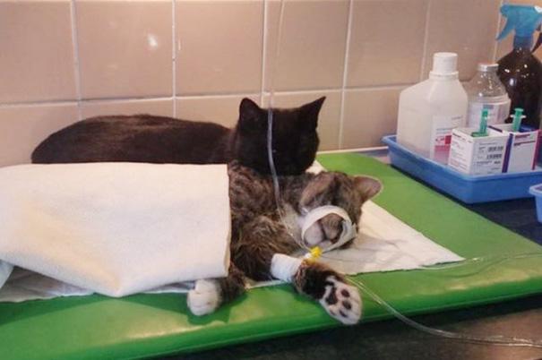 veterinary-nurse-cat-hugs-shelter-animals-radamenes-bydgoszcz-poland-10