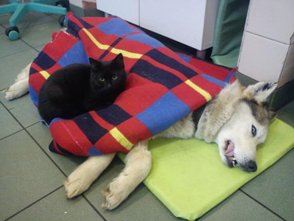 veterinary-nurse-cat-hugs-shelter-animals-radamenes-bydgoszcz-poland-4