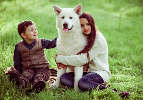Amoureux-chiens-1