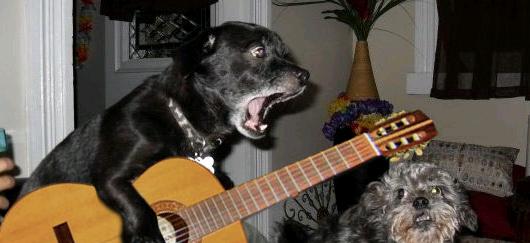 Amoureux-chiens-16