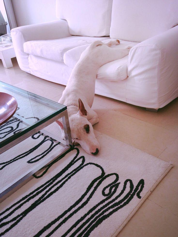 Bull-Terrier-sleeping-15