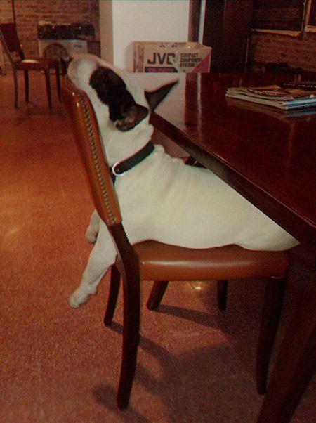 Bull-Terrier-sleeping-21