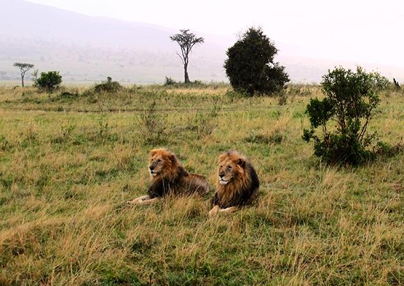 Cecil-lion-endangered-1