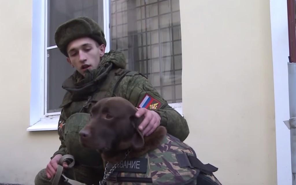 Diesel-dog-armour-3