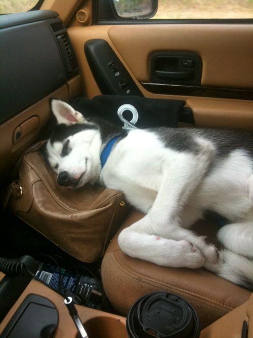 Husky-position-13
