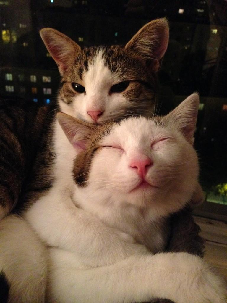 cat-thankful-30