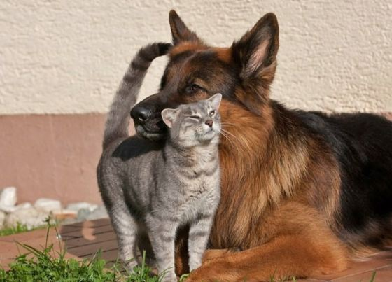 cute-cat-with-dog-pics