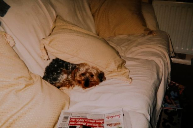 oldest-dog-britain-2
