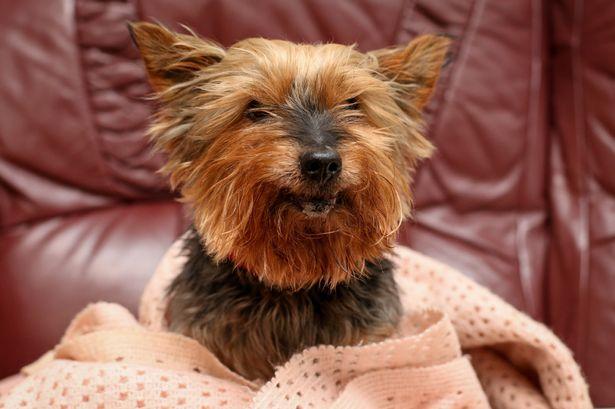 oldest-dog-britain-3