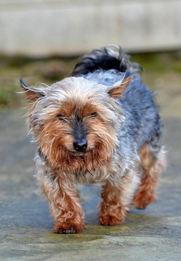 oldest-dog-britain-4