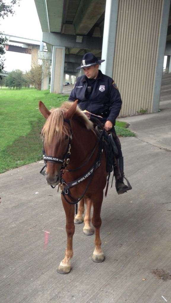 police-dying-horse-1