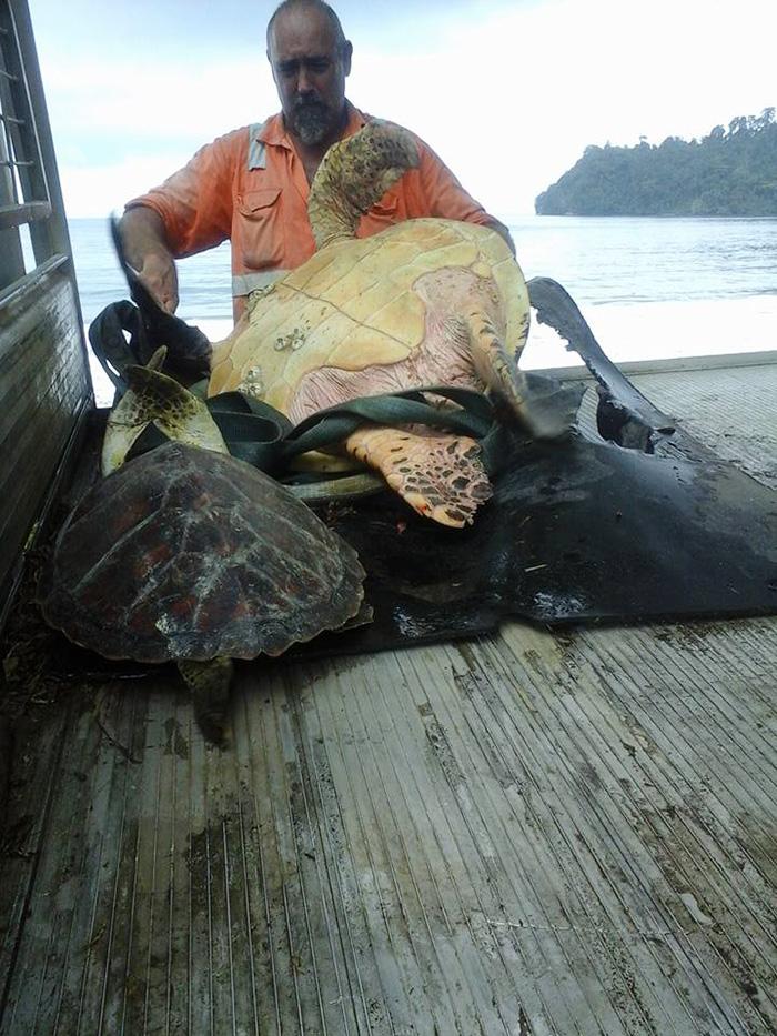 save-sea-turtles-1