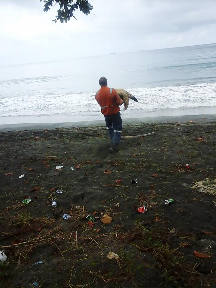 save-sea-turtles-2