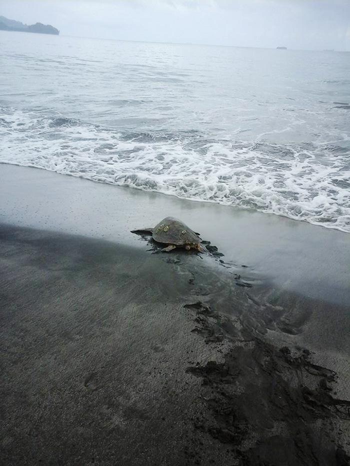 save-sea-turtles-3
