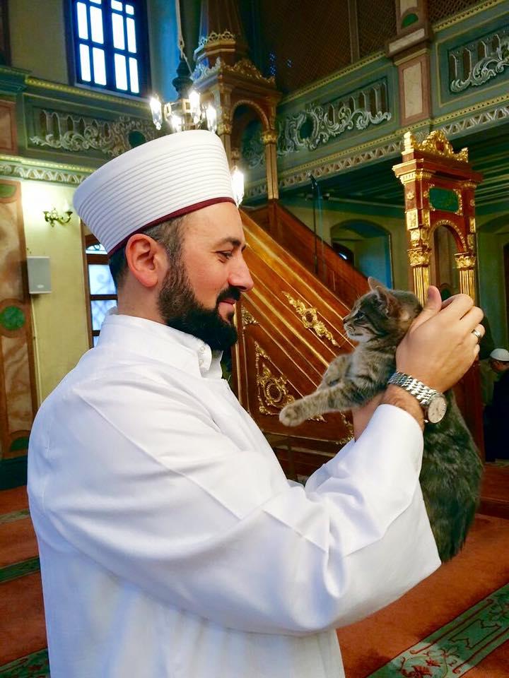 Imam-turquie-chats-errants-3