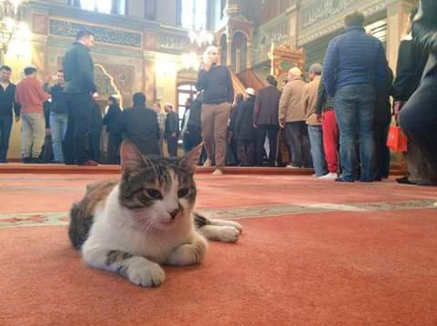 Imam-turquie-chats-errants-8