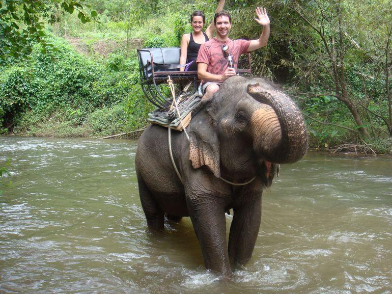 elephant-torture-entrainement-14