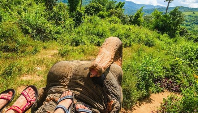 elephant-torture-entrainement-2
