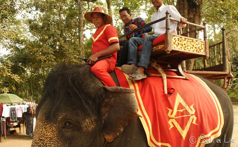 elephant-torture-entrainement-24