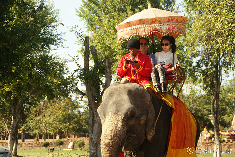 elephant-torture-entrainement-27