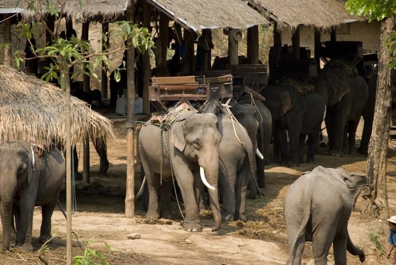 elephant-torture-entrainement-3