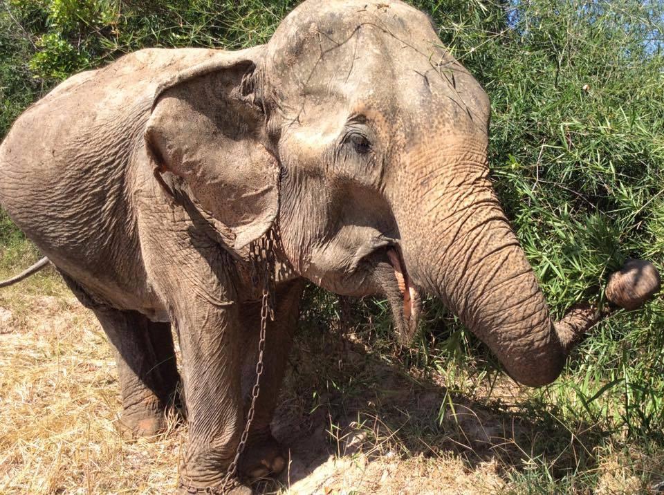 elephant-torture-entrainement-5