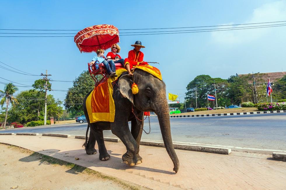 elephant-torture-entrainement-6