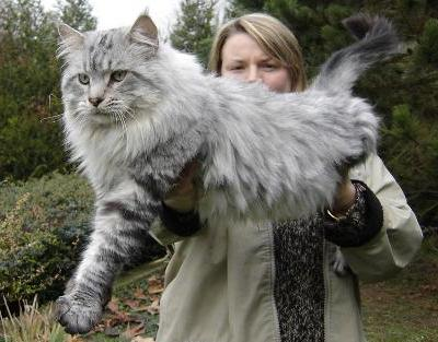 gros-chat-10